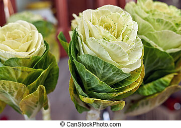 White brassica, flowers similar to cabbage, close-up