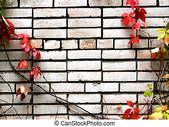 White brick wall with ivy plant