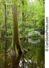 white bridge in swamp