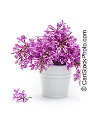 White bucket with lilac on a background