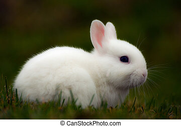 white bunny in grass