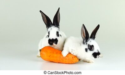 white bunny on a white screen near a carrot