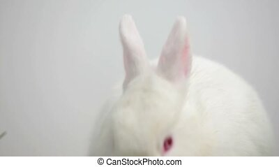 White bunny rabbit on white background with basket of easter...