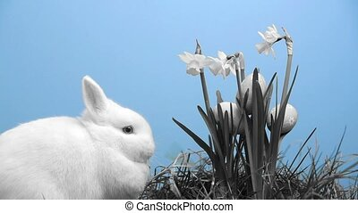 White bunny rabbit with easter eggs stuck in bunch of...