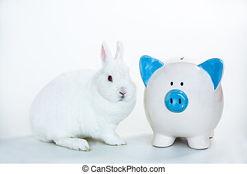 White bunny sitting beside blue and white piggy bank