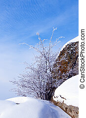 White bush in snow over blue cloudy sky