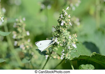 White butterfly in the garden close up
