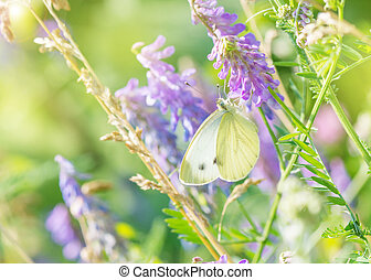White butterfly on a summer morning meadow - Beautiful white...