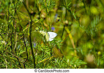 White butterfly on a yellow wildflower. Background image.