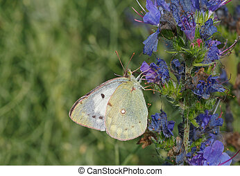 white butterfly on blue flower