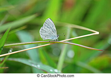 White butterfly on green leaf
