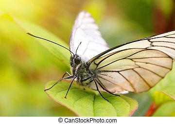 white butterfly on green leaf macro