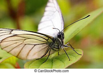 butterfly on green leaf macro