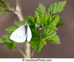 white butterfly on green leaf nature