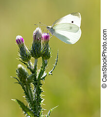 white butterfly on nature