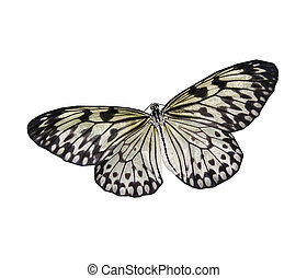 White butterfly - A white and black butterfly isolated on...