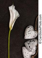Calla lily on dark background