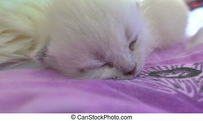 white cat and a cat sleeping on a bed caring mom and son