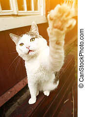 cat close up photo with paw playing