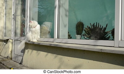 white cat conservatory - white old cat sit on conservatory...