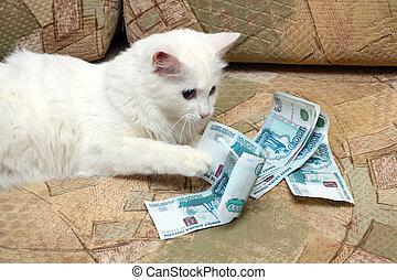 white cat count money on sofa