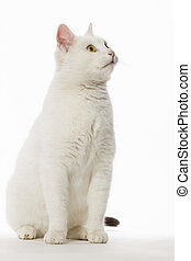 white cat high key