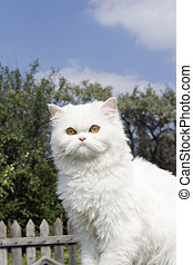 White cat in country