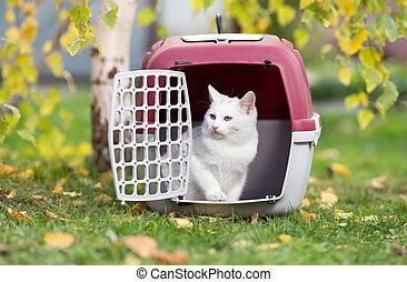 White cat in plastic carrier in park
