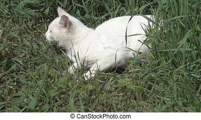 White cat in summer thick green grass. Pet on lawn. Super ...