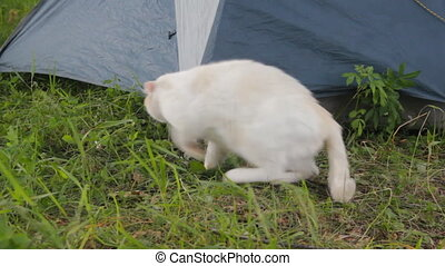 white cat is one animal tourist camp. come hide from rain