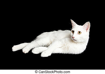 White Cat Laying Laying on Side Looking Up
