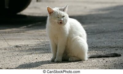 white cat licks clean outdoors slow motion video - wild...