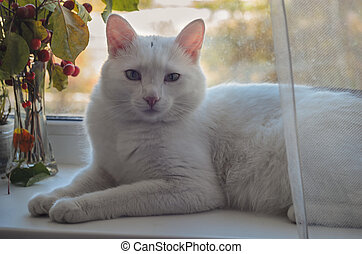 white cat lies on a windowsill