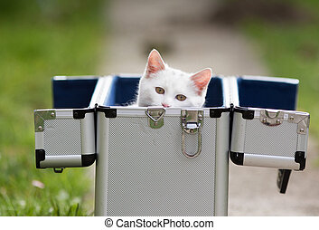 White cat looking out of suitcase