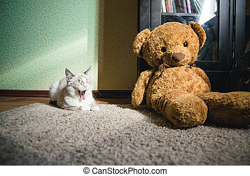 white cat lying on a carpet in square of light with teddy bear and a bookcase and yawning
