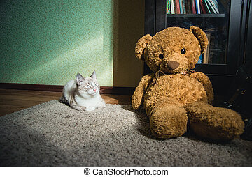 white cat lying on a carpet in square of light with teddy bear and a bookcase looking at light