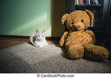white cat lying on a carpet in square of light with teddy bear and a bookcase looking at you