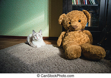 white cat lying on a carpet in square of light with teddy bear and a bookcase looking up