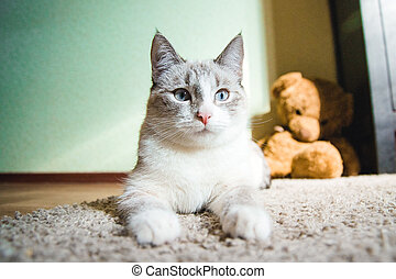 white cat lying on a carpet in the pose of the Sphinx looking calm