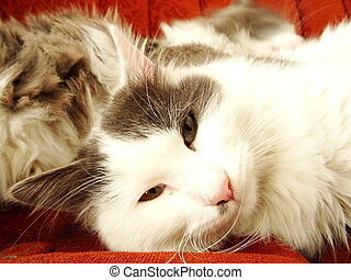 White Cat Lying on a Sofa