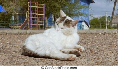 white cat on the road pure wool slow motion video - sunny...