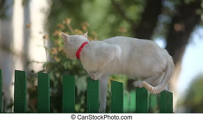 white cat sitting on a wooden fence in the morning basking in the sun on the outside sun