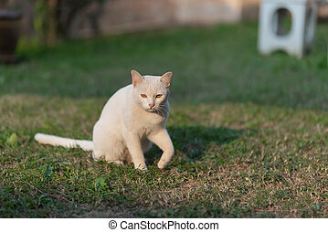 white cat sitting on the lawn