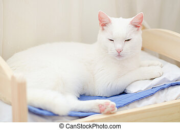 White cat sleeping in bed