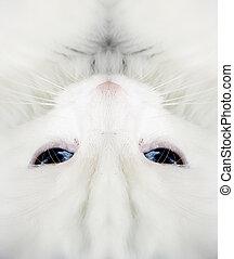 White cat:closeup