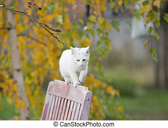 White cat walking on bench in park - Cute white cat walking...
