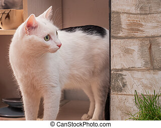 White cat with black spots standing on the balcony. He sow close-up.