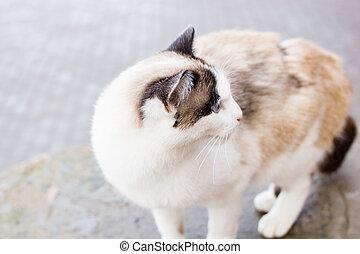 White cat with blue eyes closeup portrait