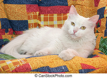 White cat with yellow eyes lying a multicolored