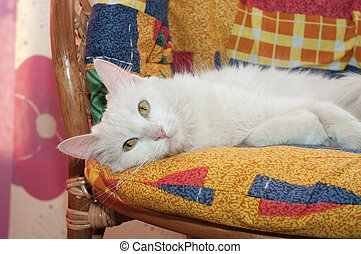 White cat with yellow eyes lying on motley